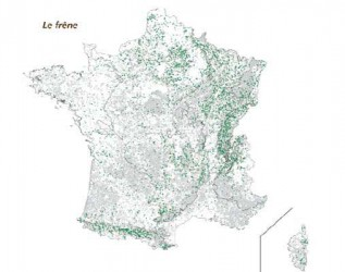 Aire de répartition du frêne - Source IGN (jpg - 23 Ko)